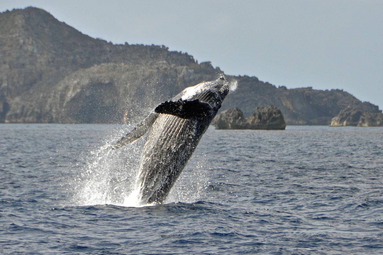 balena-cocosata-ogasawara