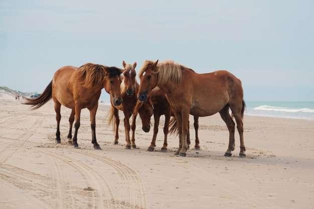 Plaja Carova, Carolina de Nord, SUA